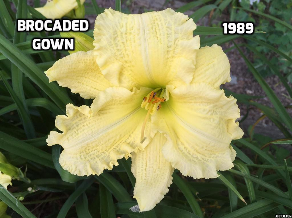 Fancy Brocaded Gown Daylily Elaboration - Best Evening Gown ...